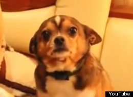 Sad Music Makes Guilty Dog More Guilty