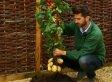 TomTato, Tomato-Potato Plant, Now Available (VIDEO)