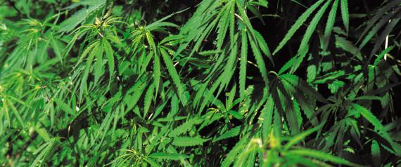 how to get prescribed medical marijuana in canada