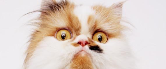 DISTURBED CAT