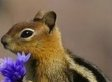 Sorry, Guys, But This Chipmunk Has More Game Than You (PHOTO)
