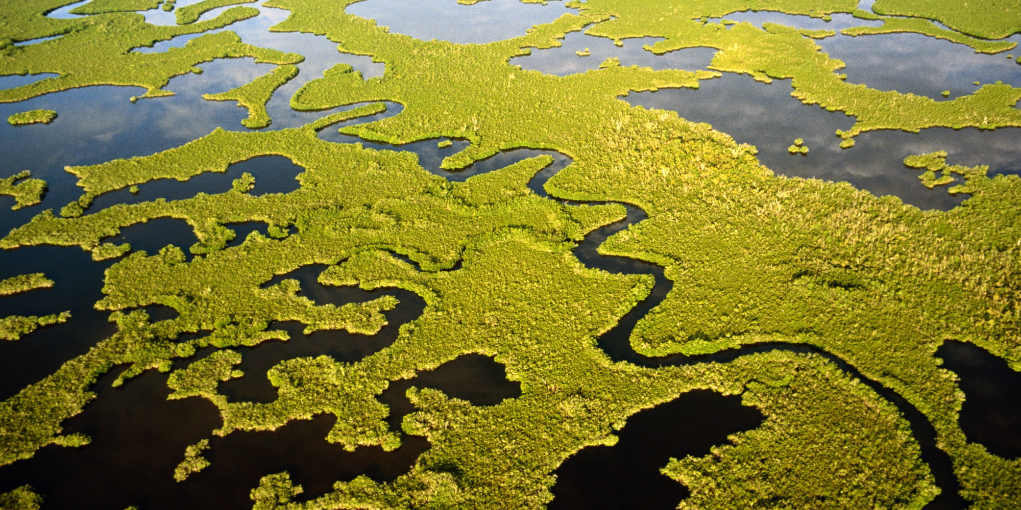 Four Signs Of Restoration Progress Across Four Corners Of The Everglades Huffpost