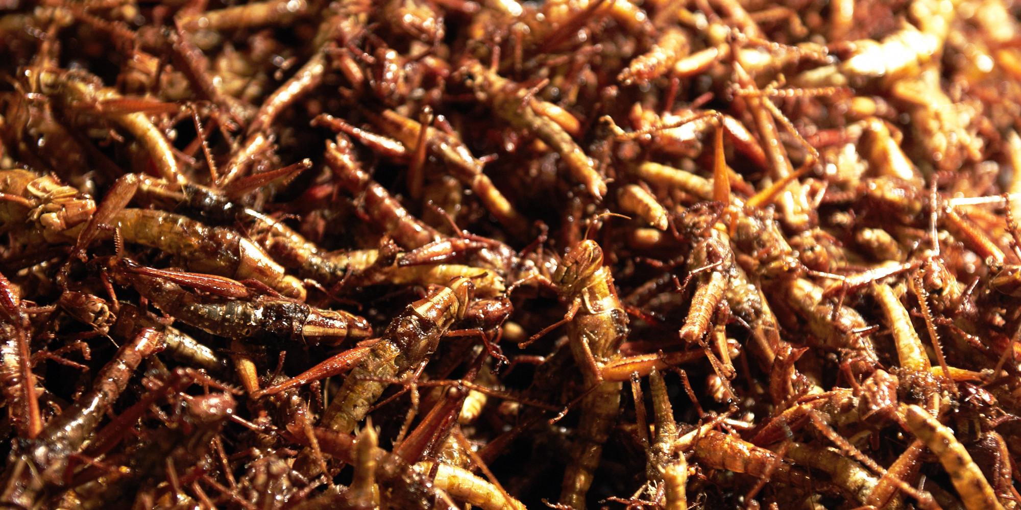 Manger des insectes avec cette farine base de - Cuisiner des crepinettes ...