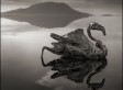 Deadly Lake Natron Turns Animals Into Ghostly 'Statues' (PHOTOS)