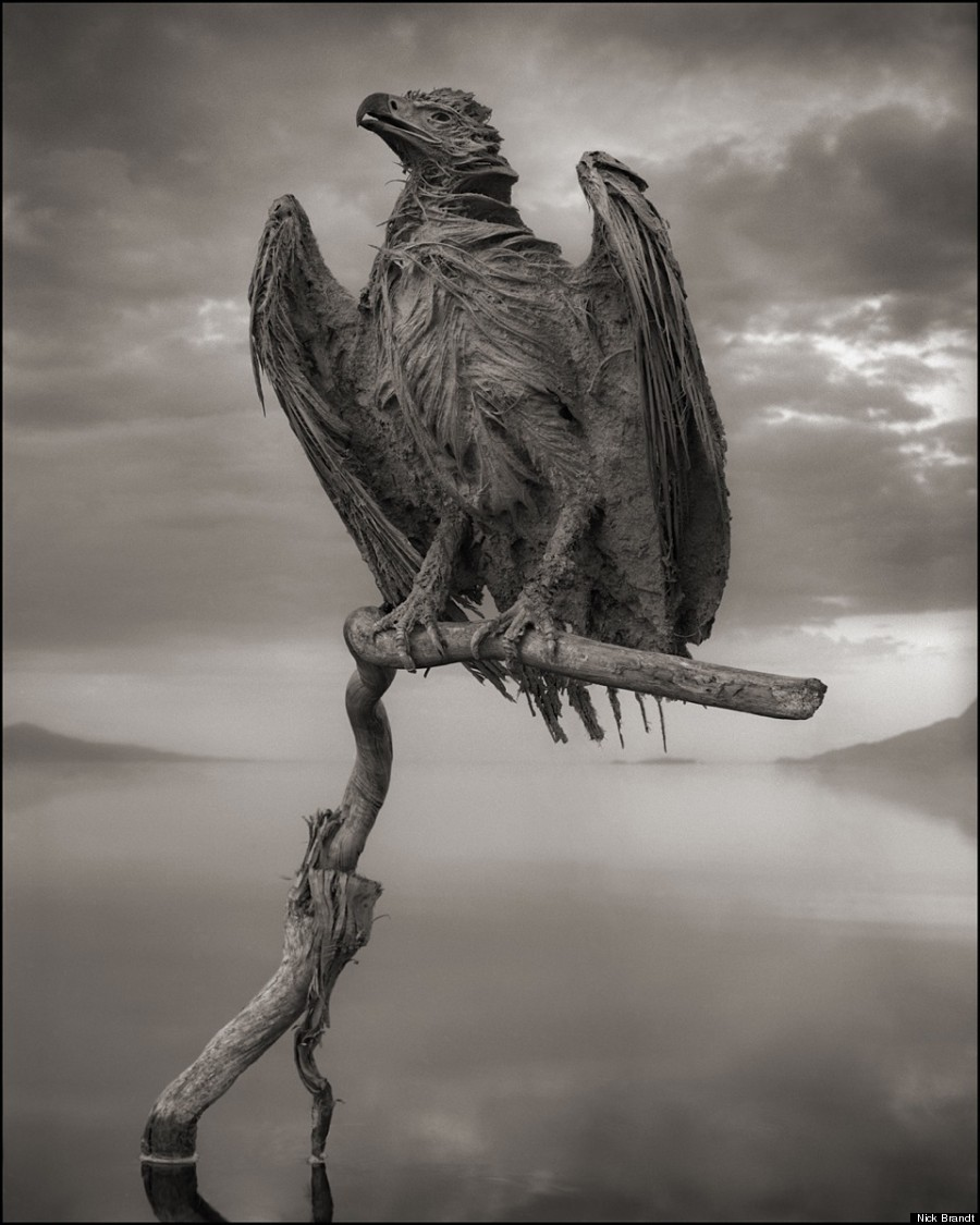 calcified fish eagle