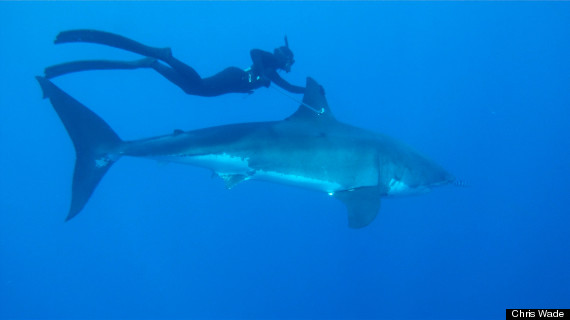 This shark swimming spearfishing superwoman might make for Good place to fish near me