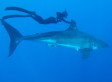 This Shark-Swimming, Spearfishing Superwoman Might Make You Rethink Your Life