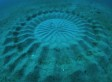Pufferfish Mating May Explain Mysterious Circles On Ocean Floor (VIDEO)