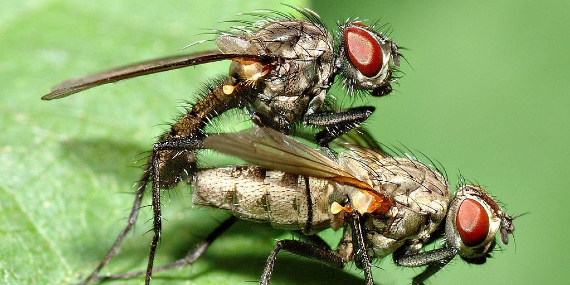 Bugs Sex 118