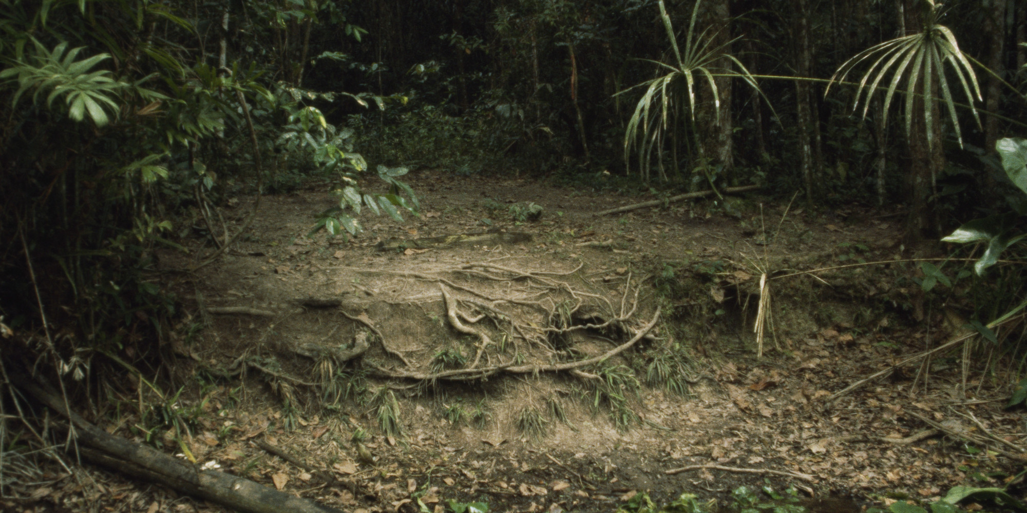 researchers discover 60 new species in suriname