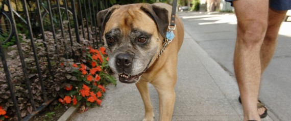 Dog Walker Capitol Hill Dc