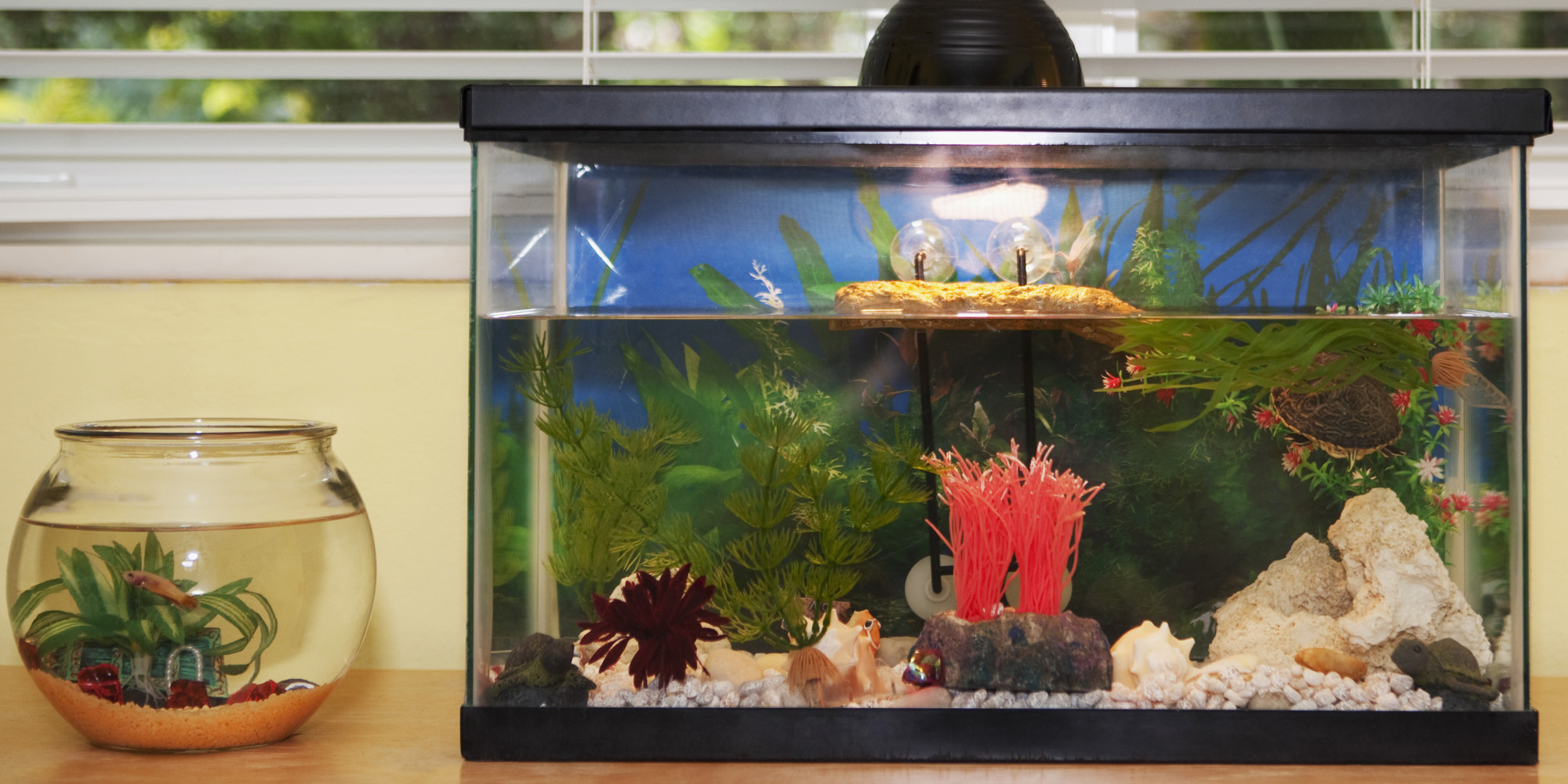 Mycobacterium Marinum Infections From Aquariums May Be