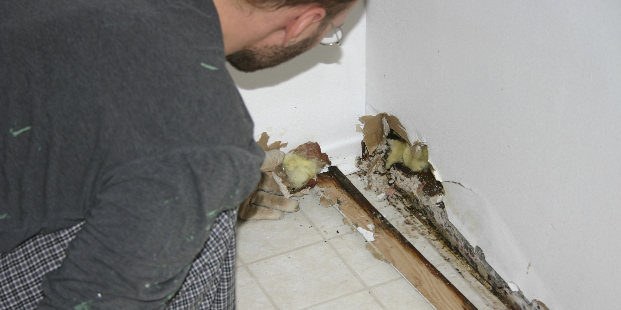 Of mice and mold 40 of american homes have health - What to do about mold in house ...
