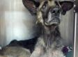 Joseph The Dog Was Chained To A Tree For 4 Years