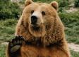 Bear Breaks Into Home In Russia, Eats Borscht Soup Before Residents Call Police (PHOTOS)