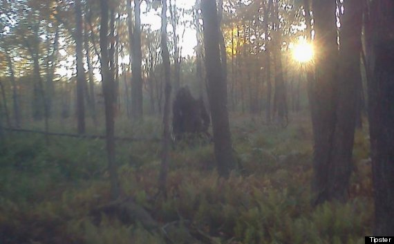 bigfoot stump