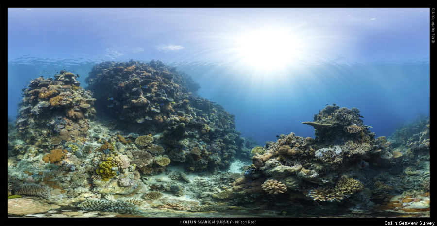 climate change coral