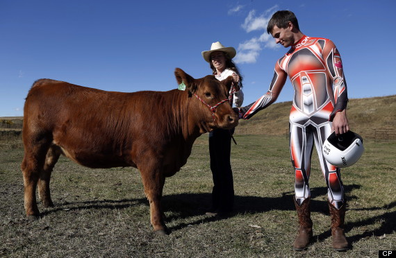 luge cow