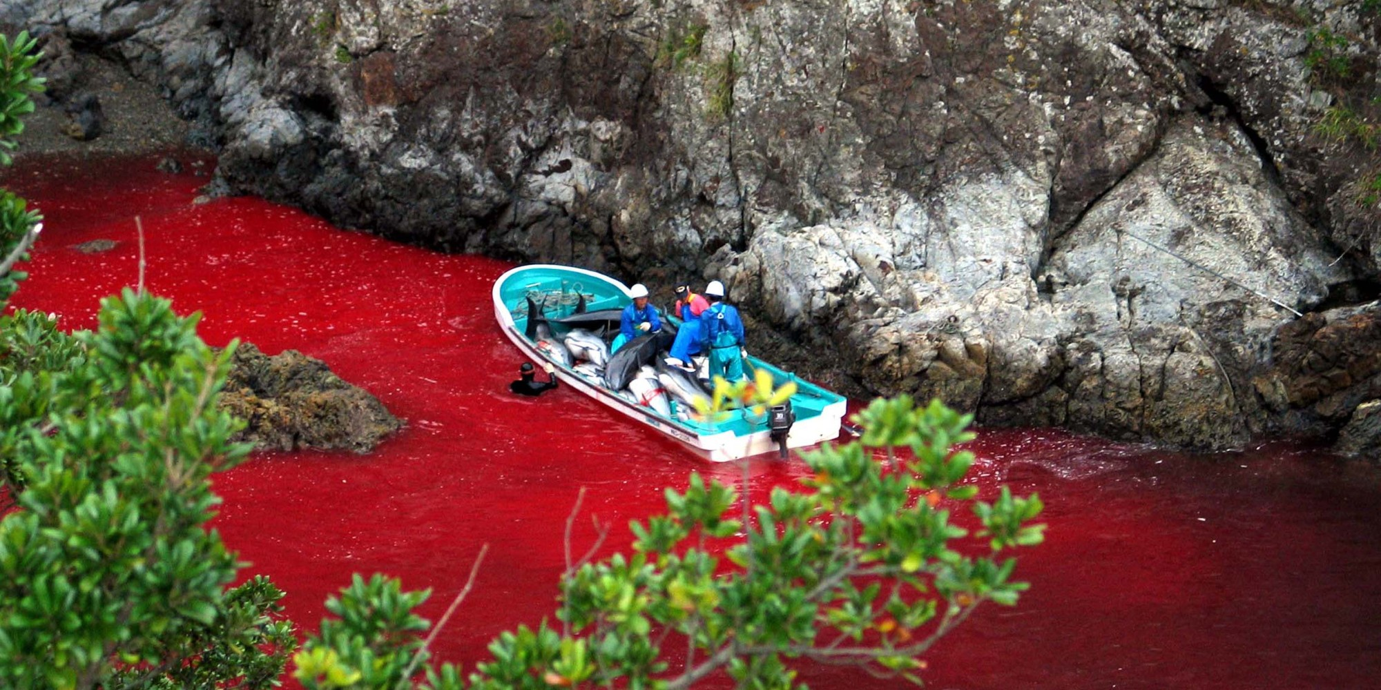 japanese fishing village of taiji dolphin