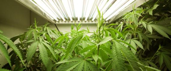 Majority Of Texas Voters Want To Legalize Marijuana