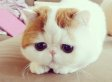 A Cat Named Snoopybabe Exists And He's Adorable (PHOTOS)