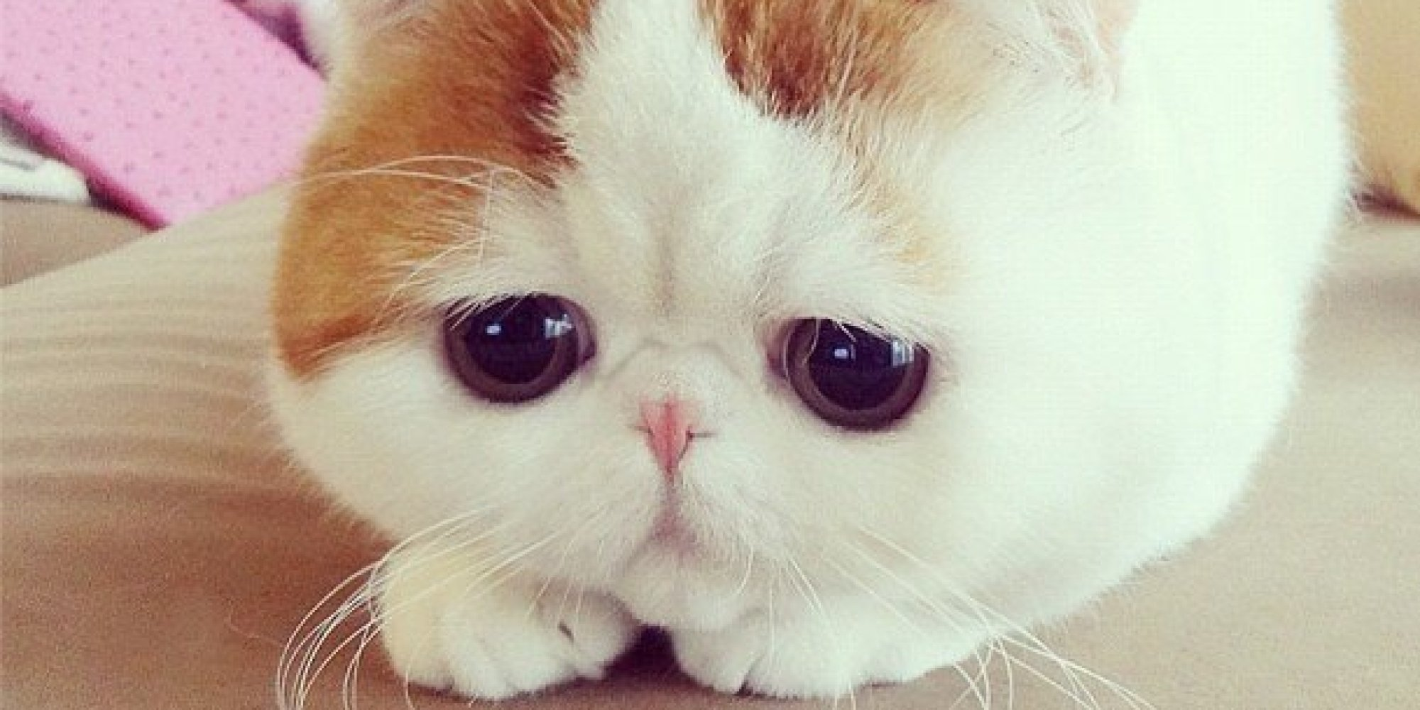 A Cat Named Snoopybabe Exists And He S Adorable Photos