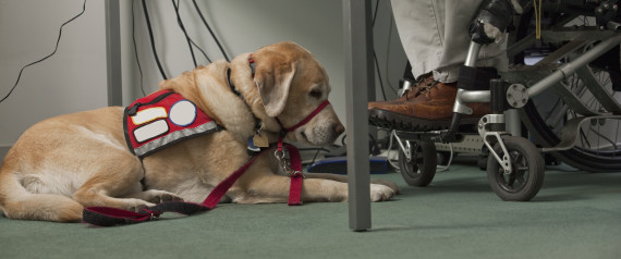 Bringing Service Dogs In The Classroom