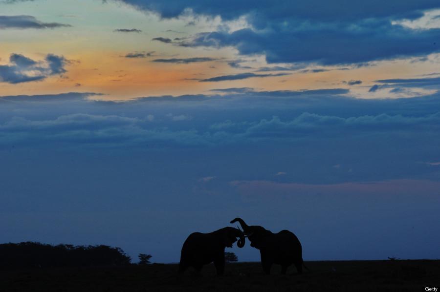 elephant11