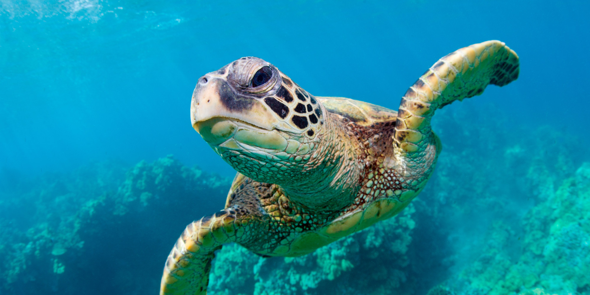 a project on the turtless prefered types of fish to eat What do turtles eat turtles, like the humans who love them, are a diverse bunch there are over 300 species of this ancient reptile, and each one has its own preferred diet.