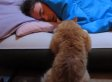 Cat Uses Jedi Mind Tricks To Try And Awaken Owner (VIDEO)