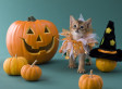 10 Ways America Has Ruined Halloween For British People