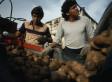 Latino Labor Is Vital For Idaho Farming