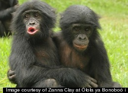 Orphan Ape Study Sheds Surprising Light On Animal Emotions