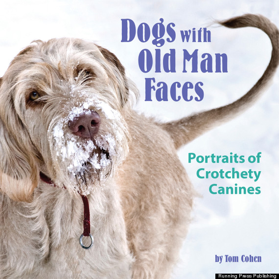 These Adorable Dogs Have Old Man Faces | HuffPost