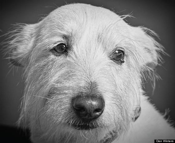 saul dog