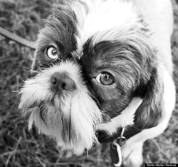 homer dog