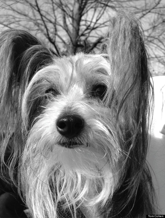 pascal dog