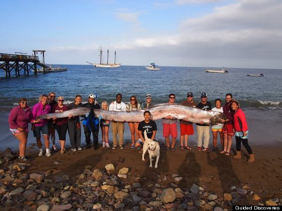 Oarfish Discovered Near Catalina Measures 18 Feet