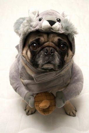 squirrel pug