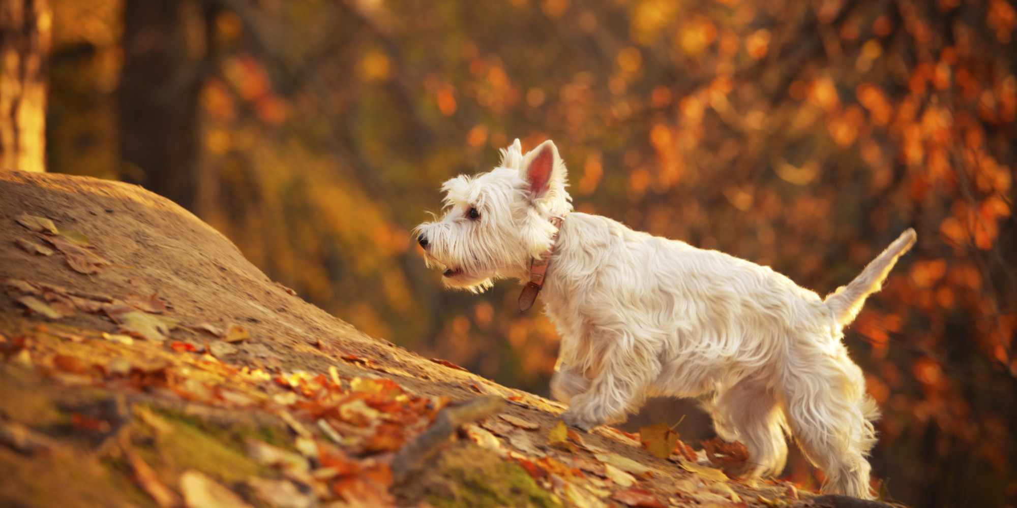 How to prepare pets for the autumn season?