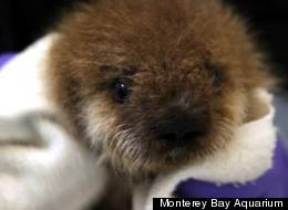 Adorable Otter GIFs Just Ruined Our Entire Afternoon
