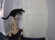 Cat Helps Dog Pull Off Daring Escape From Kitchen (VIDEO)