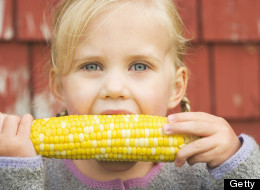 Table Talk: What Exactly Are GMOs?
