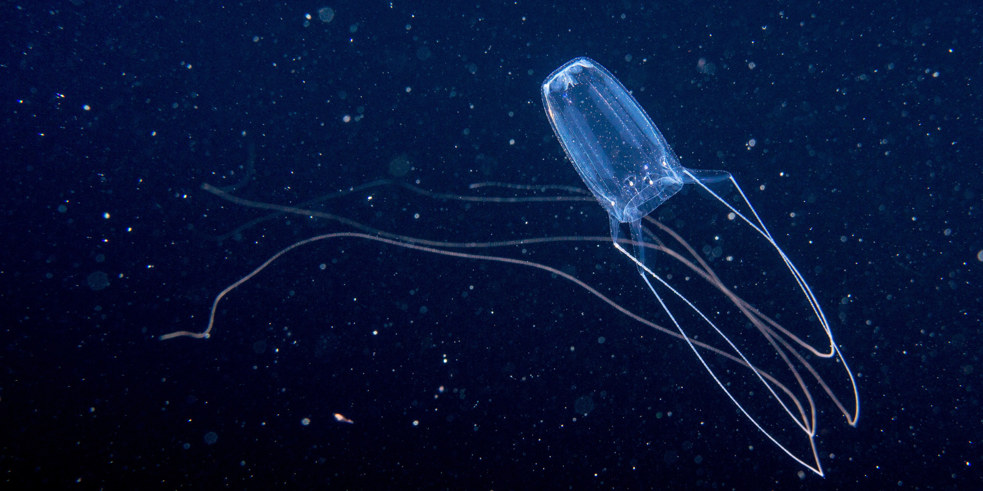 Jellyfish Stings An Increasing Public Health Concern ... - photo#4