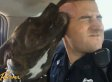 Officer Dan Waskeiwicz Responds To Call About Vicious Dog.. And Adopts Lovable Pit Bull Instead