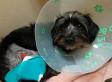 Squamish Abandoned Dog, Harold, Was Badly Injured And Neglected