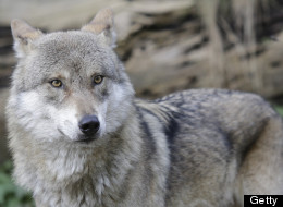 PHOTOS: Wolves, Giraffes And Baby Dolphins