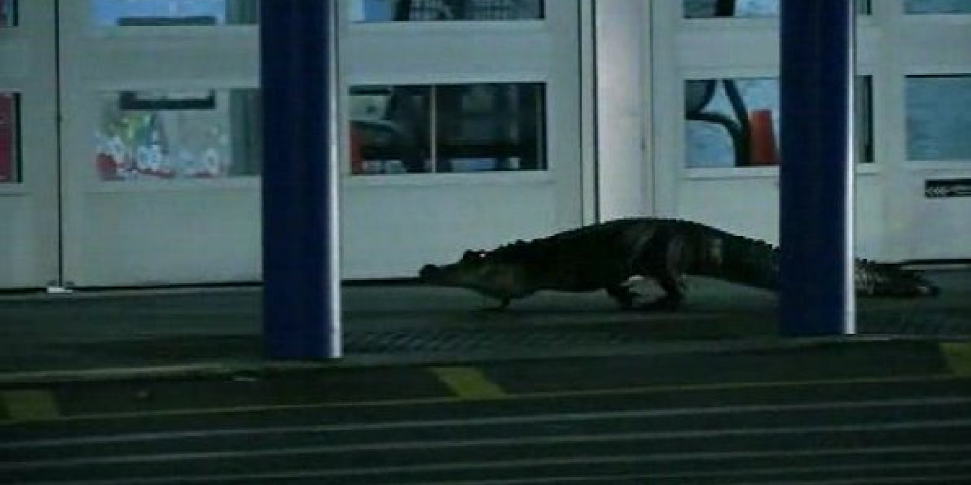gator shows up at florida walmart forces staff to lock doors video. Black Bedroom Furniture Sets. Home Design Ideas