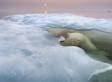 Wildlife Photographer Of The Year 2013: Jaw-Dropping, Award-Winning Photos