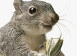 Jody Putnam Kicked Off Police Force After Shooting Squirrel At Dollar Store